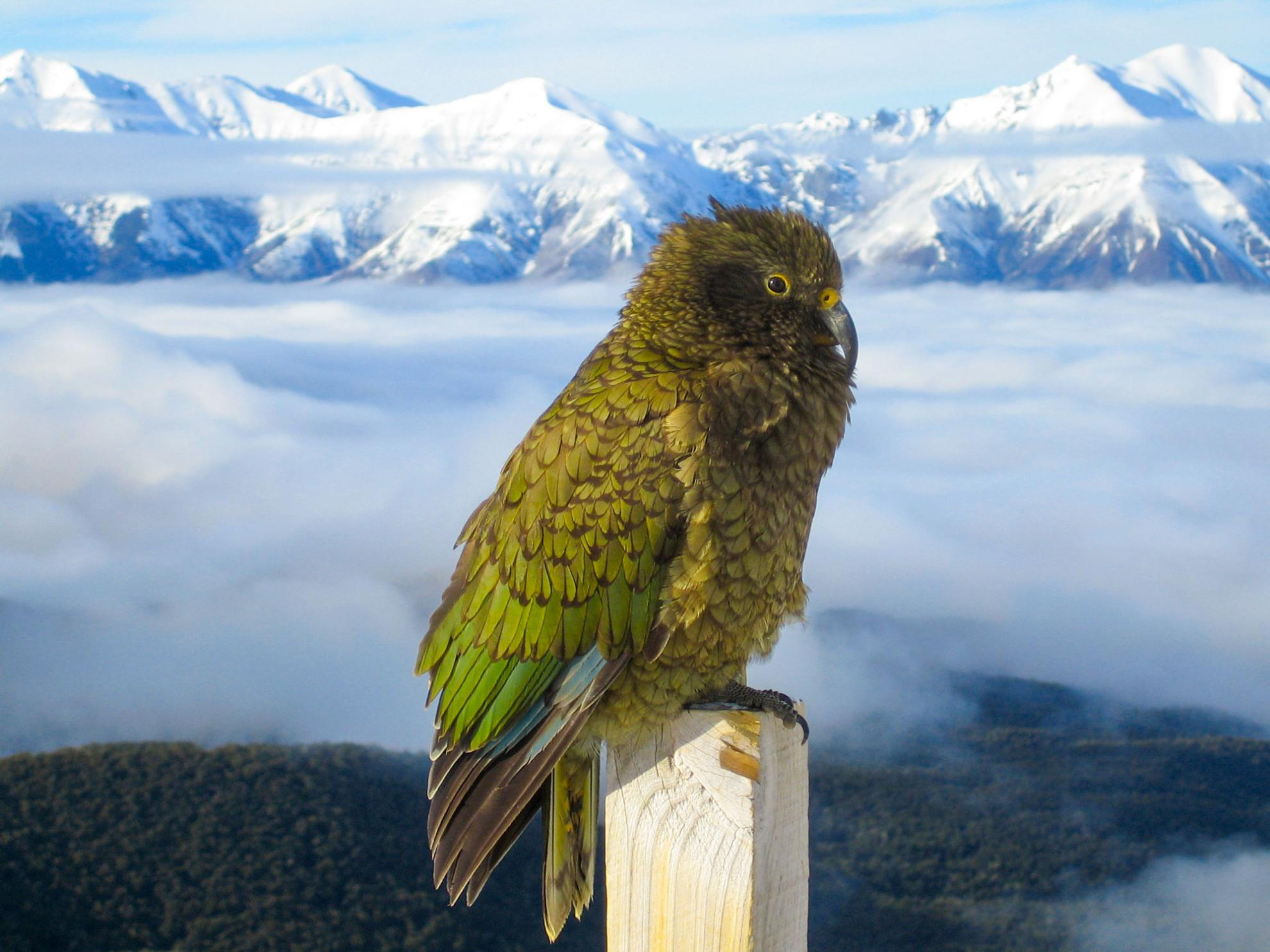 Kea Broken River