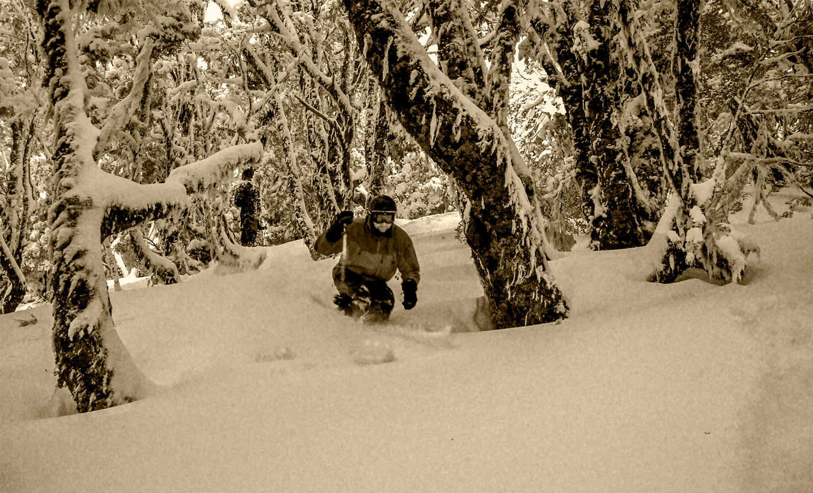 tree skiing New Zealand